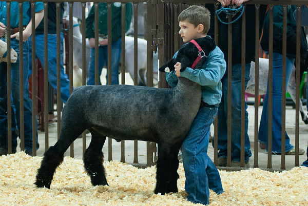 kay_county_showdown_sheep_20191207-15