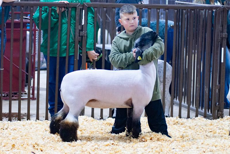 kay_county_showdown_sheep_20191207-10