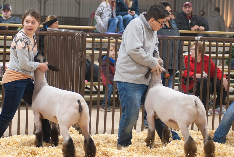 kay_county_showdown_sheep_20191207-24