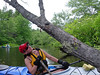 1344 DSCN6197 Tree climbing turtle