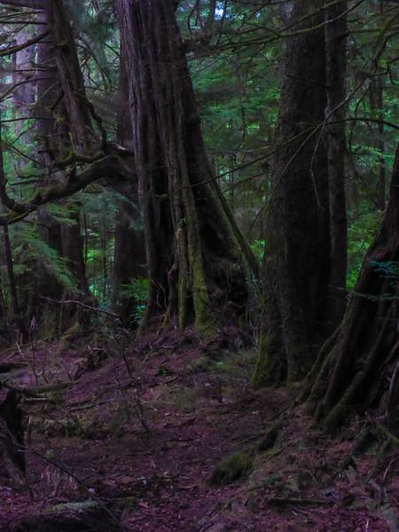 Dark Forest Spring Island