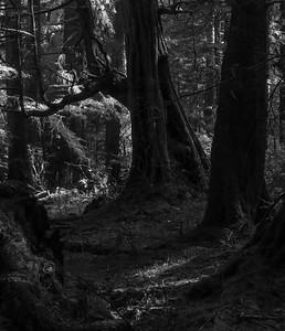 forest light thunder grove