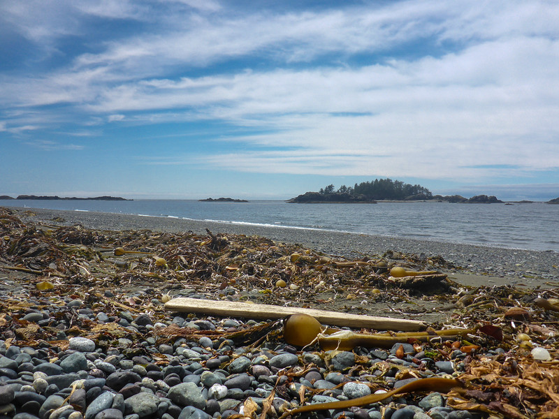 seaweed West Beach