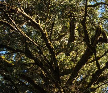 Moss gardens,Spring Island