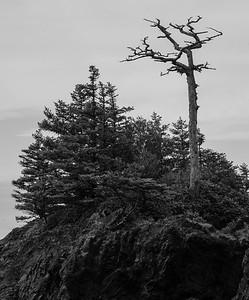 dead tree on rock, Spring Island