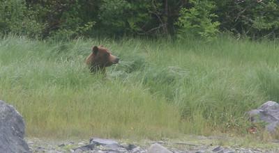 First Brown Bear