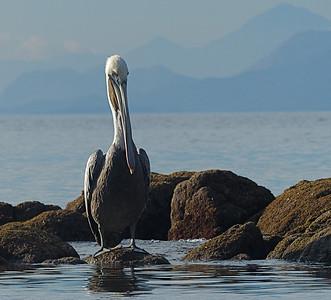 We always enjoy the Baja birdlife.