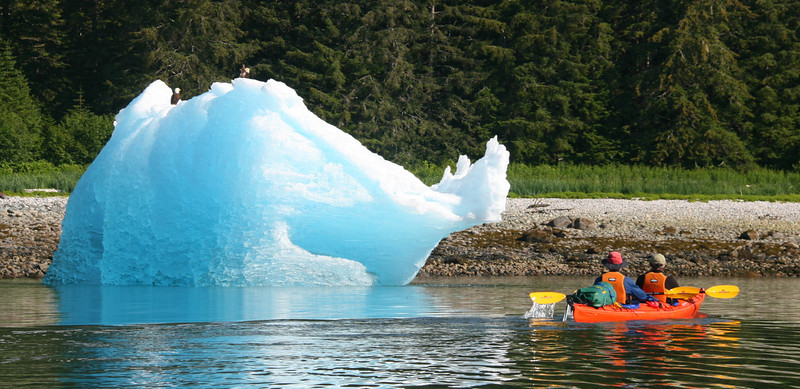 Eagles like to hangout on icebergs.