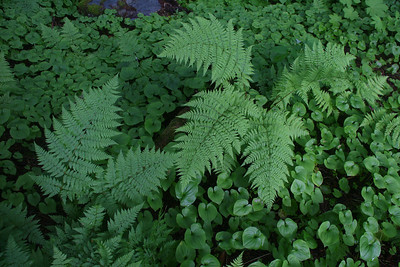 The vegetation is wonderful in Southeast Alaska. It is so thick that it often makes finding a campsite difficult.
