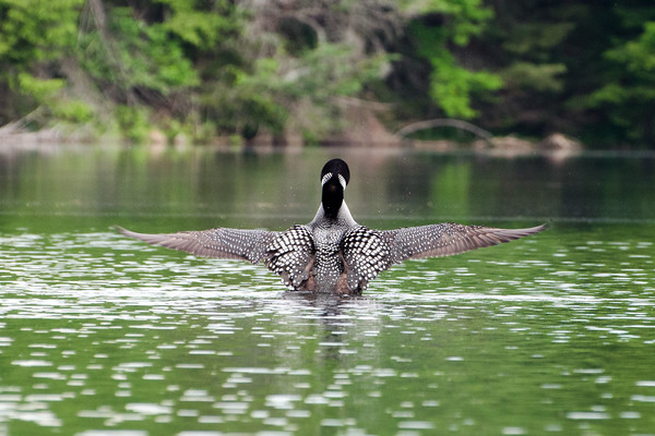 Kayaking on Knapp Pond I