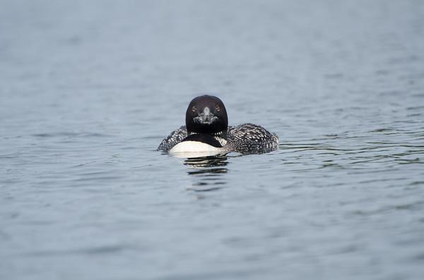 Kayaking on Grafton Pond, 3rd visit