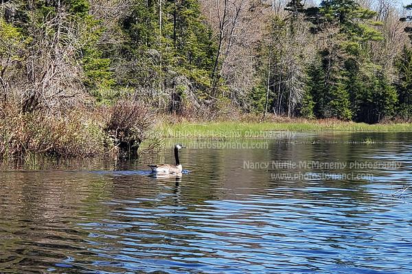 McDaniel's Marsh