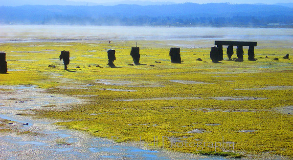 Low tide at Humboldt Bay and delapidated pier.