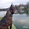 She loves riding in the kayak and is an excellent navigator.