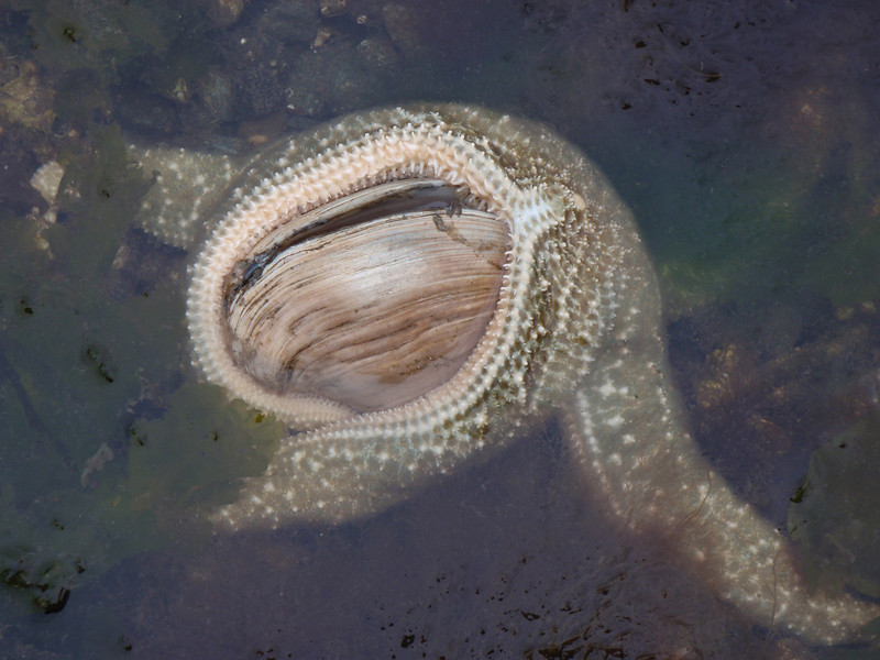 starfish are amazing predators.  You should see what they did to our oyster beds on Harstine :^(