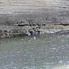 Swiming Uruni River