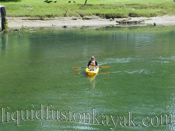 Dog Paddle 5.30.2010
