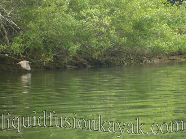 Tracks to Kayaks 5.21.2012