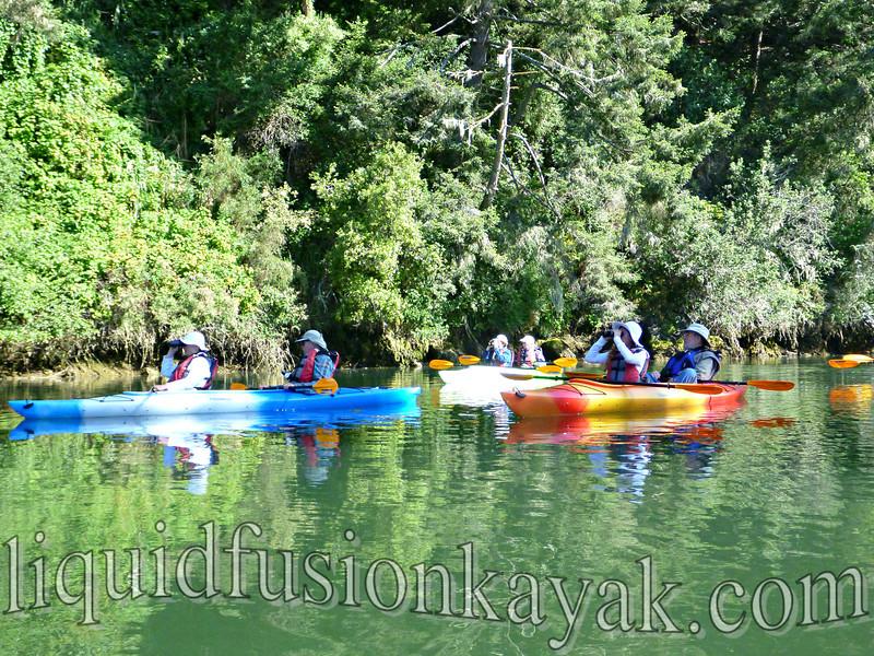 mendocino, birding, tour, kayak