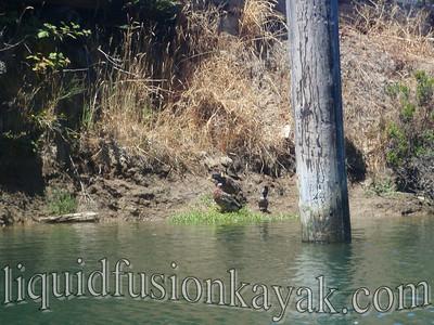 Kayaking in Fort Bragg's Noyo River