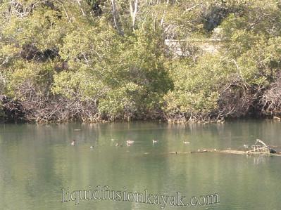 Kayaking and bird watching on Fort Bragg's Noyo River.