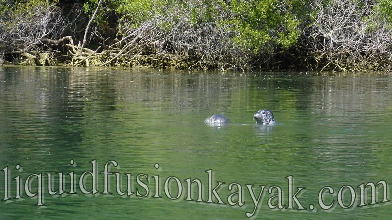 Liquid Fusion Kayaking's Best of 2015