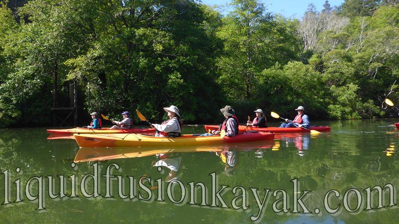 Mendocino Coast Audubon Birding Kayak Tour 6.13.2015