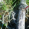 The victrinox knives worked great to cut rope and netting out of driftwood we could not move.