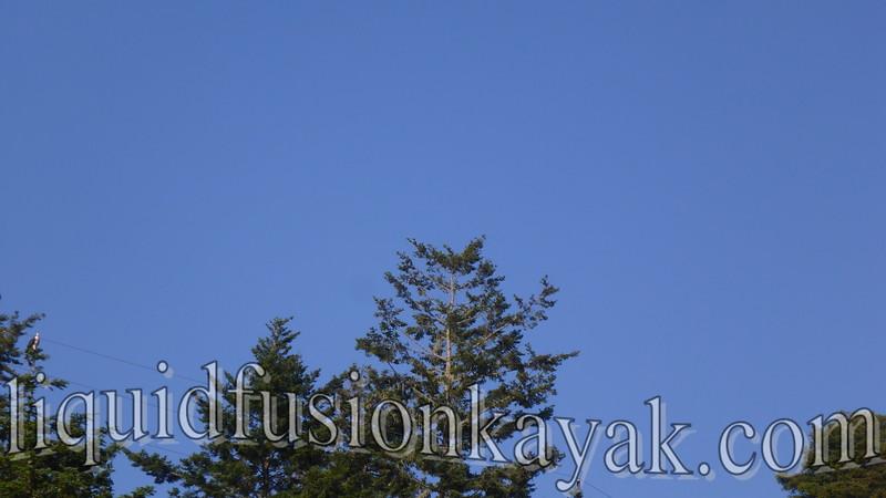 Sunset Bird Paddle 5.28.2016