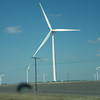 A lot of these on the way to Hwy 77 out of Corpus