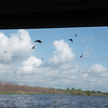 Swallows under the 59 bridge that crosses Lake Texana.