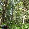 6/10 - Bear cache
