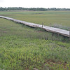 A nice boardwalk to a small bayou draining the marsh and fish farm