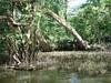 Area where the bayou narrows