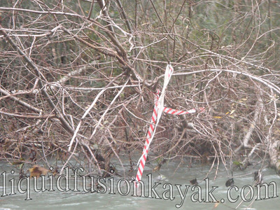 We saw these Candy Cane Ribbons all along our run marking where salmon surveyors have seen salmon redds.