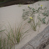 New sand dune forming