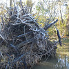 A little white stuff on the tops of the tree roots