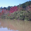 Some fall colors