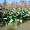 Some frost damage