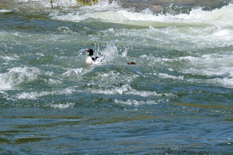Duck's Class II Russian Rapids