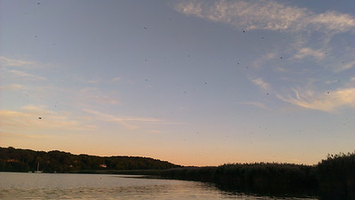 The Swallows!