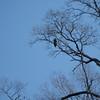 Sat/A young eagle