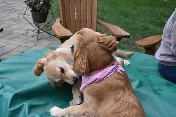 Kayla & Piper - September 27, 2015