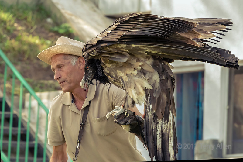 Pavel Pfander, eagle trainer with Lammergeir (Gypaetus barbatus) on his arm, Sunkar Falcoln Centre, Almaty, Kazakhstan