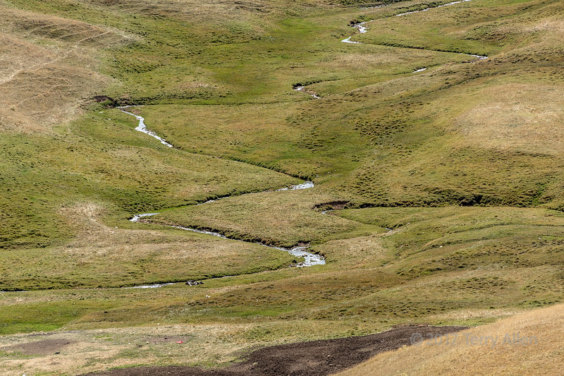 Meandering steam with dead (or sleeping) cow, Assy Plateau, Kazakhstan