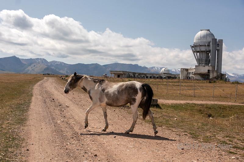 Sleek dappled horse crossing a dirt road near the Assy Turgen Observatory, Assy Plateau, Kazakhstan