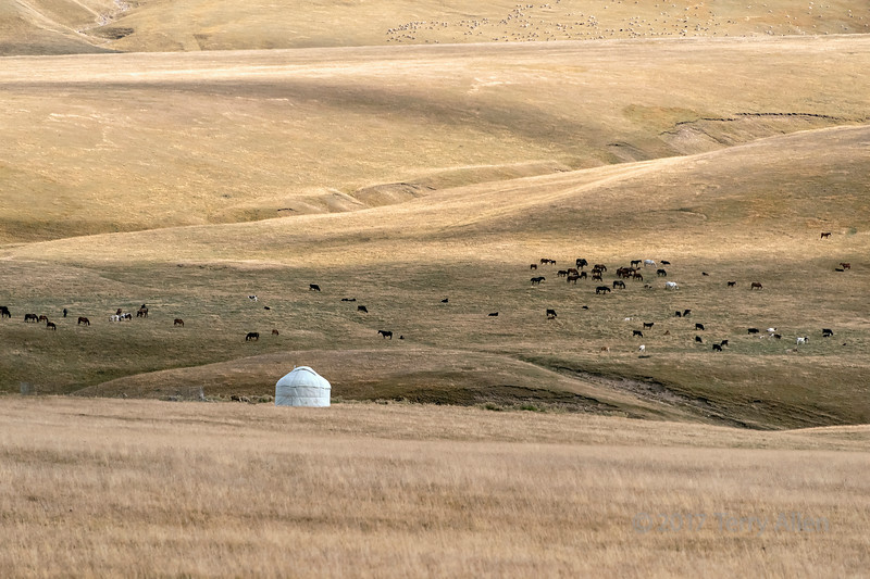 Yurt and grazing flocks, Assy Plateau, Kazakhstan