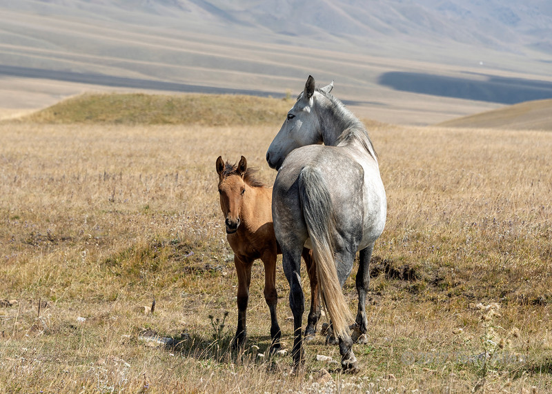 Mare and colt