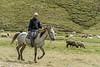 Man herding sheep and goats on horseback, Assy Plateau, Kazakhstan