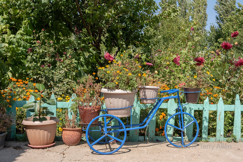 Flowers with blue bike and fence, Sharafkent, Kazakhstan